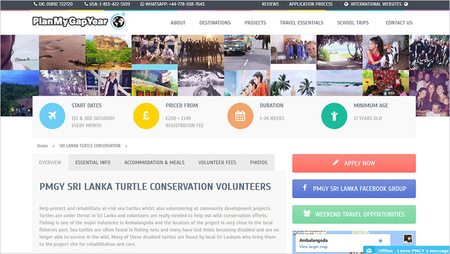 Turtle conservation Plan My Gap Year