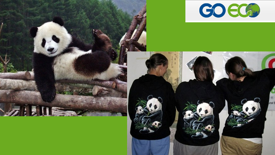 Go Eco Panda  Conservation Volunteer  Project in China