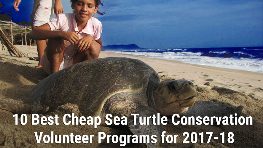 10 Best Cheap Sea Turtle Conservation Volunteers Program