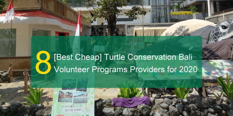 bali turtle project for volunteers