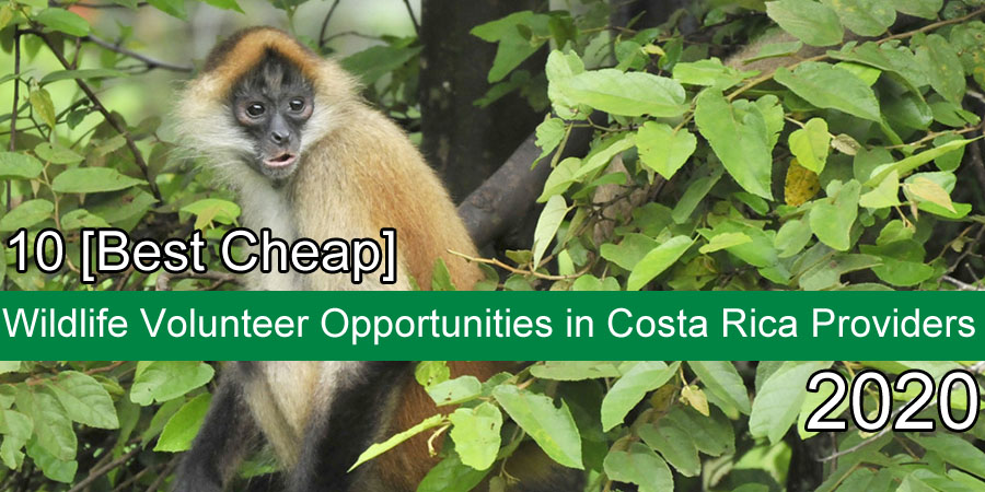 costarica wildlife projects