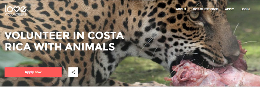 love costarica wildlife project