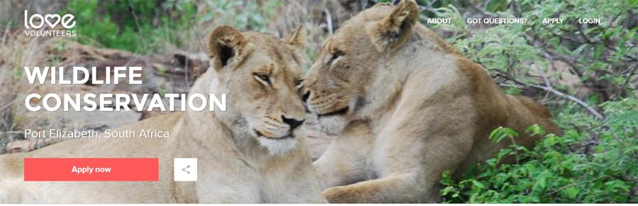 volunteer wildlife project in southafrica