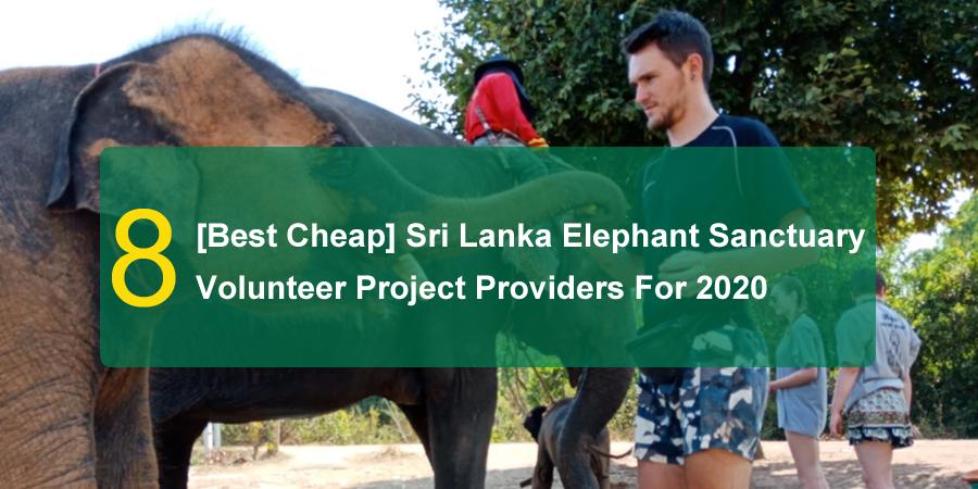 volunteer Sri Lanka Elephant Sanctuary