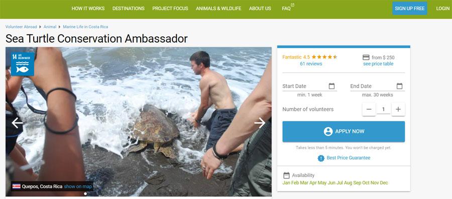 volunteer world turtle costarica