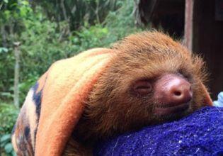 Wildlife Conservation in Peru - Over 20,000 Happy Volunteers since 2003