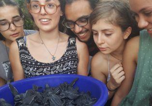 Volunteer With Turtles in Costa Rica-Over 22000 Happy Volunteers Since 2006