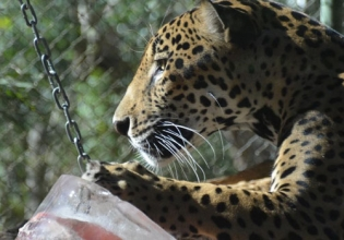 Wildlife Conservation in Costa Rica - Over 20,000 Happy Volunteers since 2003