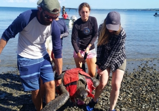 Sea-turtle Conservation in Costa Rica - Over 20,000 Happy Volunteers since 2003