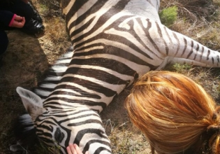 Wildlife Conservation in South Africa - Over 20,000 Happy Volunteers since 2003