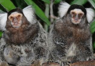 Costa Rica Wildlife Sanctuary Volunteer- Over 22000 Happy Volunteers Since 2006