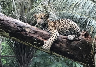 Wildlife Conservation Internship in Costa Rica - Lowest Fees & Trusted since 2003