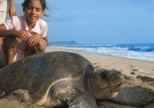 Turtle Conservation Internship in Mexico - Lowest Fees & Trusted since 2003