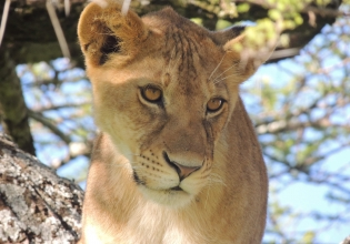 Wildlife Conservation Internship in South Africa - Lowest Fees & Trusted since 2003
