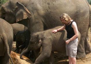 Elephant Conservation Internship in Sri Lanka - Lowest Fees & Trusted since 2003