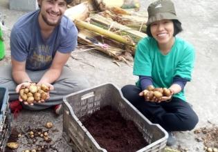 Rooftop Organic Farming
