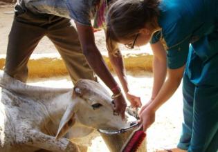 Animal Care & Rescue