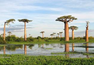 Socotra Island Yemen Tour