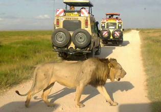 7 Days Masai Mara, Lake Nakuru and Amboseli budget Safari