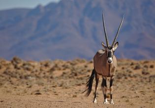 6 Day Taste of Namibia