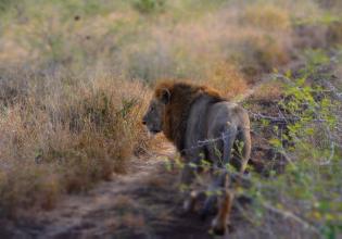 3-Day Kruger Big 5 & Panorama Route Exclusive Safari