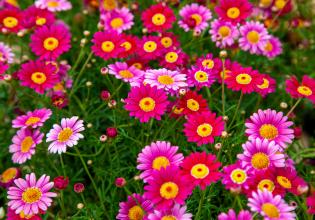 Extraordinary Wild Flower Adventure