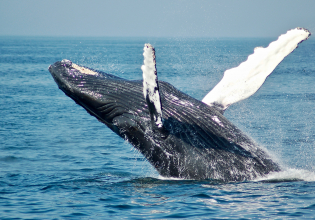 Whales – Penguins - Seals - Dolphin Watching Safari - 4 Days