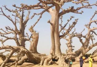 Gorée Island and Dakar Tour