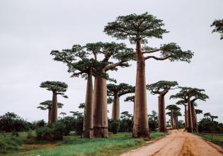 Madagascar 9 Days Baobabs and Lemurs Tour