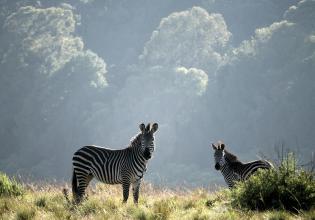 3-Day Liwonde National Park Affordable Package