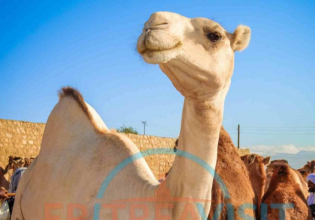 Special 7-day Eritrea Tour