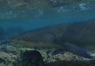 Shark Watching in Cape Verde