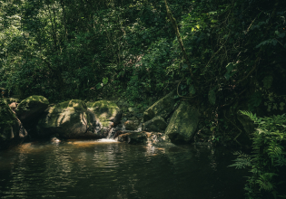 A taste of the Amazon, pink dolphins and much more!