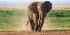 tsavo west/ amboseli national park