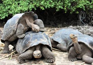 7 Day Galapagos Budget Island Hopping