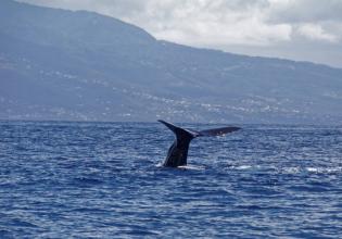 Guadeloupe Sea Excursion