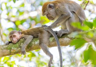 Monkey Island Rainforest Tour