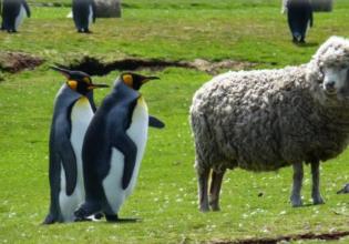 8 Days Wildlife Week- Falkland Islands
