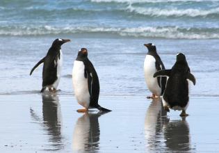 Volunteer Point - Stanley, Falkland Islands