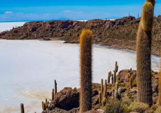 Uyuni Salt Flats Full Day  Shared Service