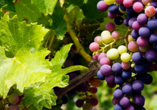 Beyond The Grape – Troodos Mountain Villages & Wineries Tour
