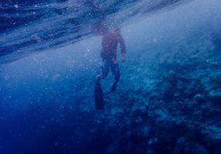 Full Day Scuba Dive Tour at Palau's best Dive sites