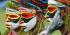 Papua New Guinea National Mask Festival