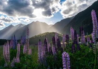 Waitomo, Rotorua and Hobbiton - 3 Days