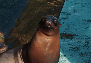 Cadzand: Seal Discovery Boat Tour