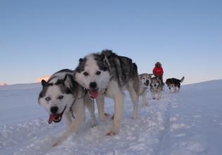 Dog Sledge Expedition – Svalbard Villmarkssenter