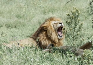 5-Day Living Among Lions - Mid-Range