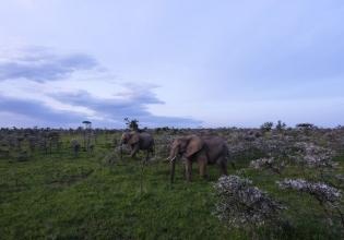5 Days Masai Mara & Lake Nakuru Budget Travel from Kisumu