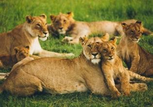 6 Days Masai Mara, Nakuru & Naivasha Budget Travel from Kisumu