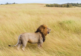 2 Days Ruma National Park From Kisumu
